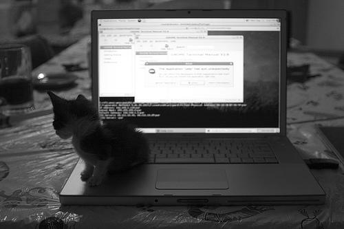 Geek Felino (click para ir a la galería del autor en Flickr)