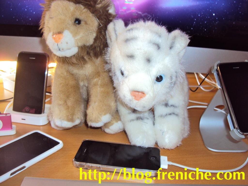 Snow Leopard & Lion